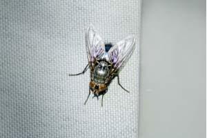 Hogar sin moscas con plantas aromáticas