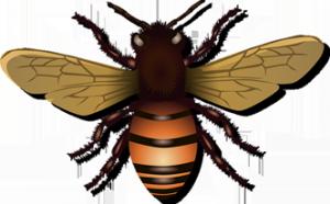 Matar moscas con miel