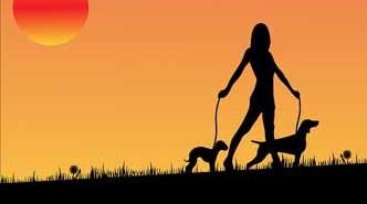 Trucos para evitar que los perros defequen en el jardín