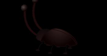 Exterminar cucarachas con bicarbonato