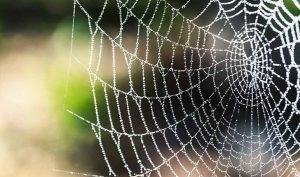 Cómo espantar a las arañas con ajo y alcohol - Trucos de hogar caseros