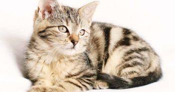 Plástico para evitar que los gatos arañen el sofá