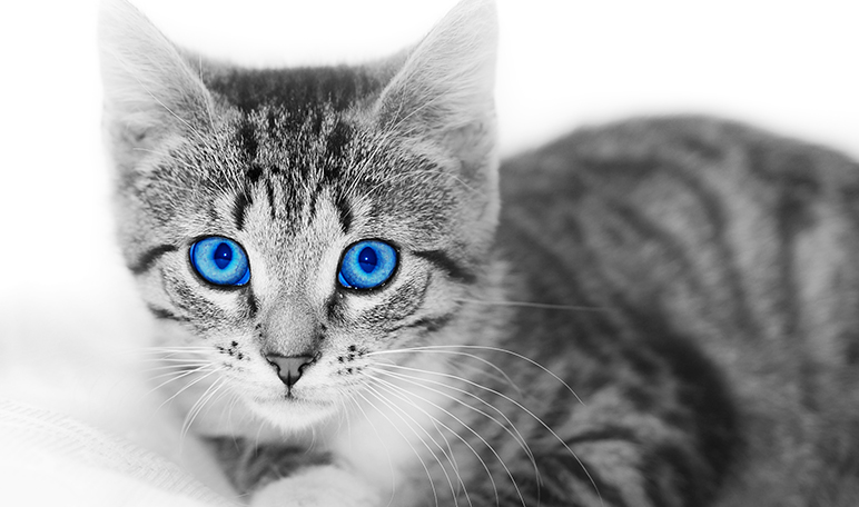 Retirar el pelo de los gatos con agua - Trucos de hogar caseros