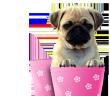 Desparasitar perros con poleo menta