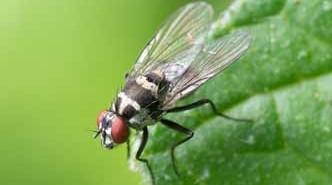 Mata moscas casero con plantas aromáticas