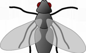 Cómo eliminar moscas con agua