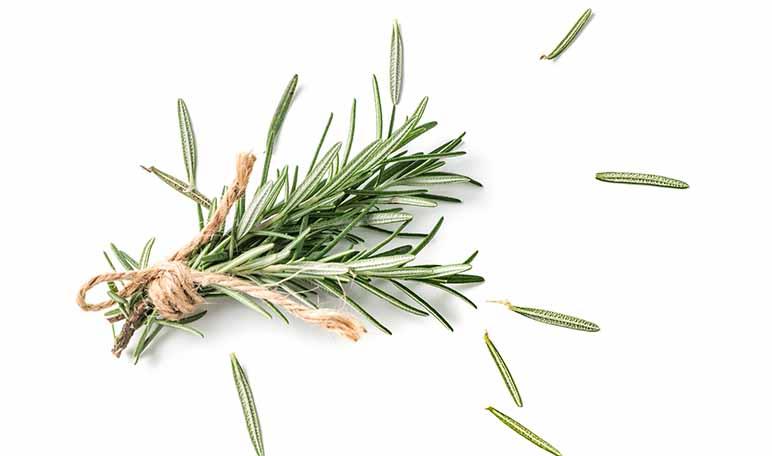 Hogar sin moscas con plantas aromáticas - Trucos de hogar caseros