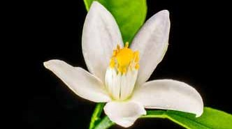 Esencias naturales para perfumar el hogar