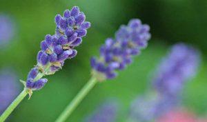 Remedios naturales con plantas para los malos olores