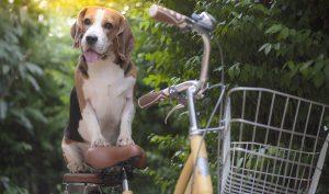 Remedio natural para eliminar las legañas de los perros - Trucos de hogar caseros
