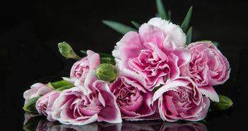 Ramo de rosas precioso con perejil - Trucos de hogar caseros