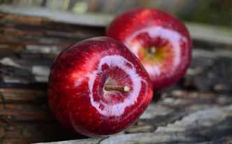 Cómo terminar con las arañas en casa usando manzana
