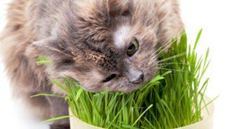 Trucos para conseguir que los gatos expulsen las bolas de pelo