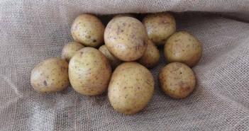 Patata para las cremalleras que se bajan