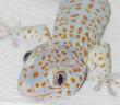 Alejar a las lagartijas con naftalina