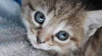 5 aspectos a tener en cuenta antes de comprar un gatito