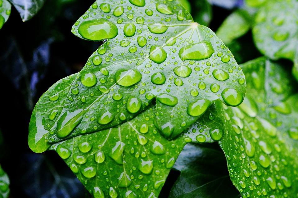Plantas de interior- ¿cuáles son sus beneficios para la salud?