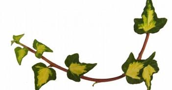 Plantas de interior: ¿cuáles son sus beneficios para la salud?