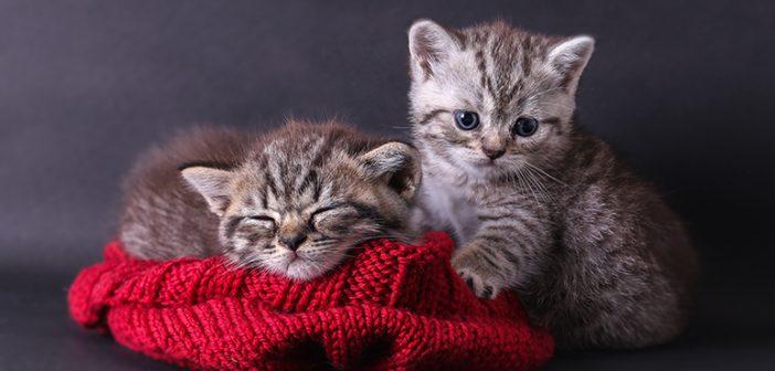 Vinagre para evitar que los gatos orinen en casa