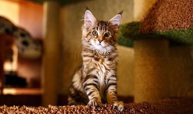 Vinagre para evitar que los gatos orinen en casa - Trucos de hogar caseros
