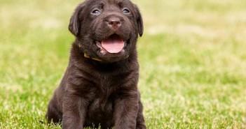 5 consejos para elegir el mejor pienso para perros