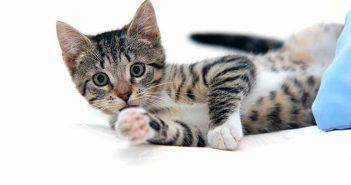 Arena para gatos: elimina el mal olor con bicarbonato - Trucos de hogar caseros