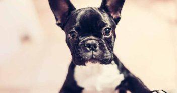 """¿Tienes mascota? Descubre cuáles son los lugares """"petfriendly"""" de España a través del móvil"""