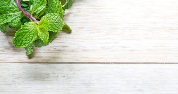 Ahuyentar a las hormigas con menta - Trucos de hogar caseros
