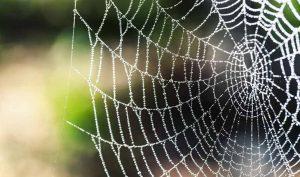 Repelente para arañas de vinagre blanco