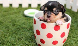 Veneno para garrapatas en perros de bicarbonato