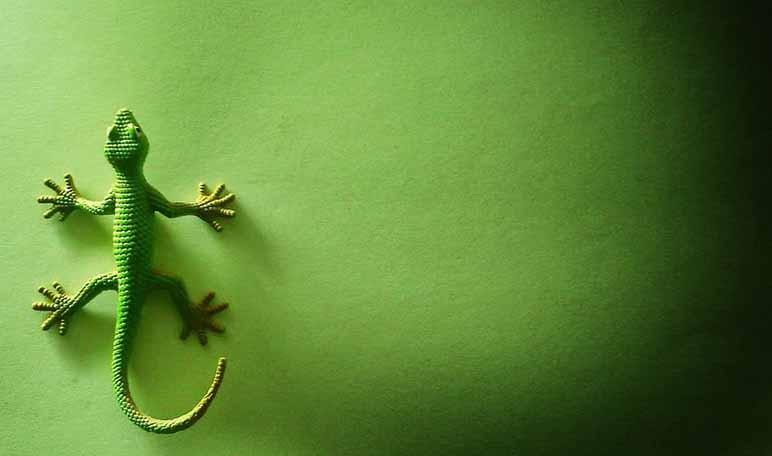 Alejar a las lagartijas con naftalina - Trucos de hogar caseros