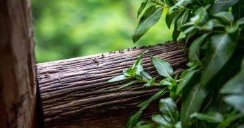 Repeler a las hormigas de manera natural - Trucos de hogar caseros