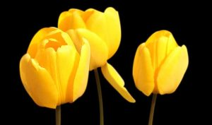 ¿Quieres regalar flores? Recurre a las tiendas de flores on-line