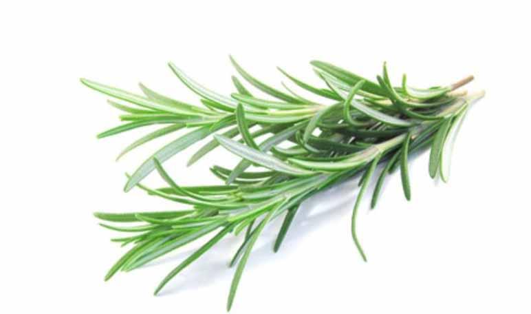 Remedios naturales para eliminar pulgas del hogar y el jardín