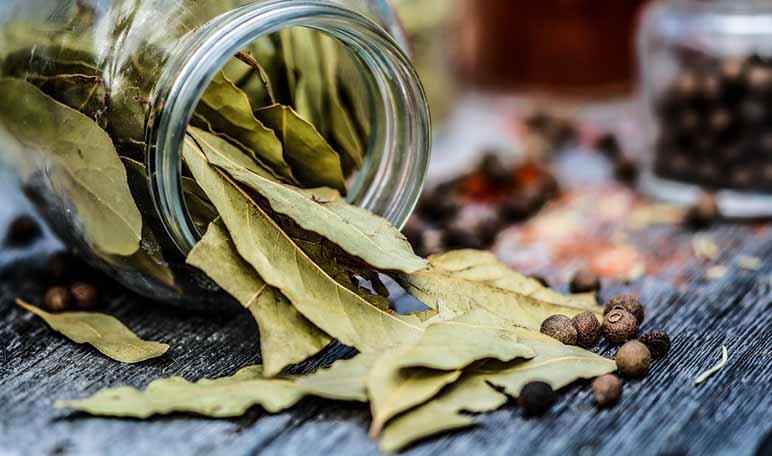 Cómo eliminar cucarachas con remedios naturales