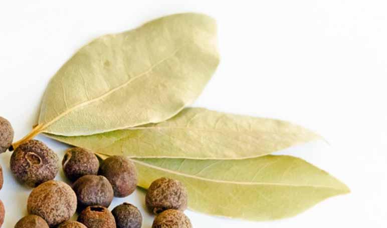 Cómo eliminar las cucarachas con remedios naturales - Trucos de hogar caseros