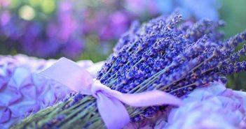 Cómo eliminar los ácaros con remedios caseros
