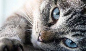 Cómo eliminar la caspa de los gatos con aloe vera - Trucos de hogar caseros