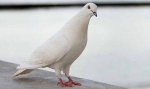 Cómo espantar palomas con remedios caseros - Trucos de hogar caseros