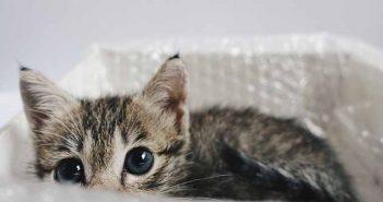 Cómo hacer rascadores para gatos en casa - Trucos de hogar caseros