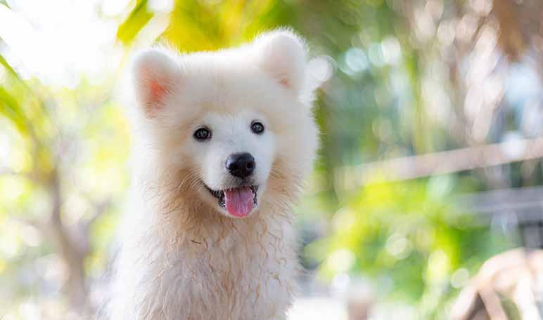 Consejos para cuidar la higiene de tu perro - Trucos de hogar caseros