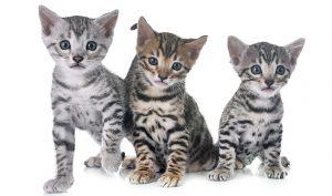Cómo interpretar los gestos de tu gato - Trucos de hogar caseros