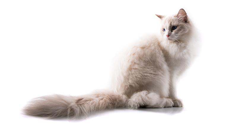 Cómo entender a los gatos - Trucos de hogar caseros