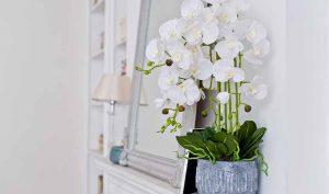 5 flores de interior que no pueden faltar en la decoración - Trucos de hogar caseros