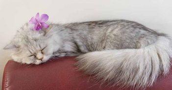 Sofás tapizados en microfibra: el secreto para los arañazos de tu gato - Trucos de hogar caseros